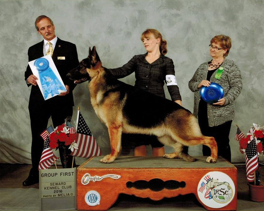 26th Home Bred Champion GSD Johnny